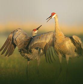 Colorado Nature Photography Exhibit
